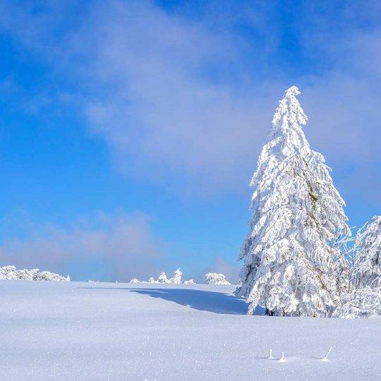 http://www.panoramic-hotel.de/wp-content/uploads/2016/12/verschneite-winterlandschaft-harz_1126x750-540x540.jpg