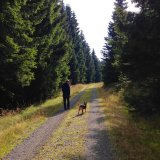Tips for stress-free Harz holidays with dogs
