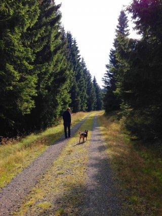 Hunde-Urlaub im Harz-Hotel Panoramic