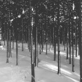 Skilanglaufen im Harz: Wo sind die besten Langlaufloipen?