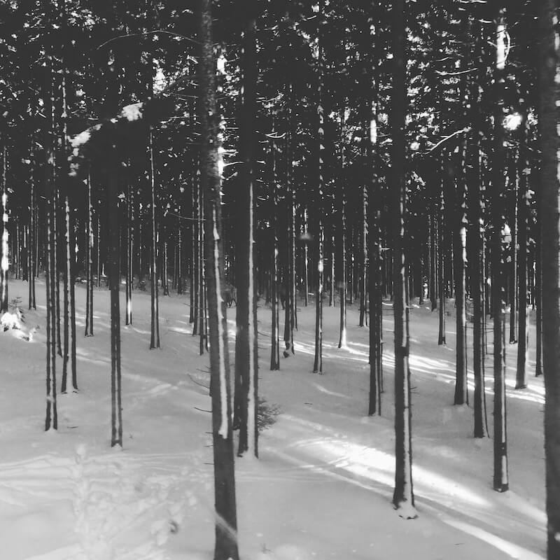 harz-skilanglaufen.jpg