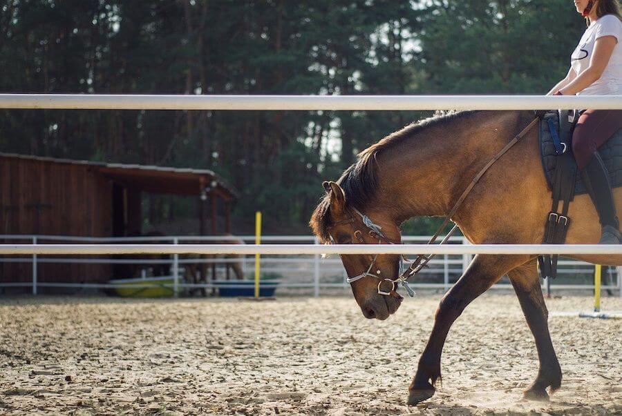 harz-reiten-pferde.jpg